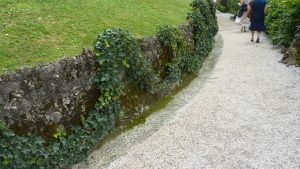 Ivy trained into garland shape